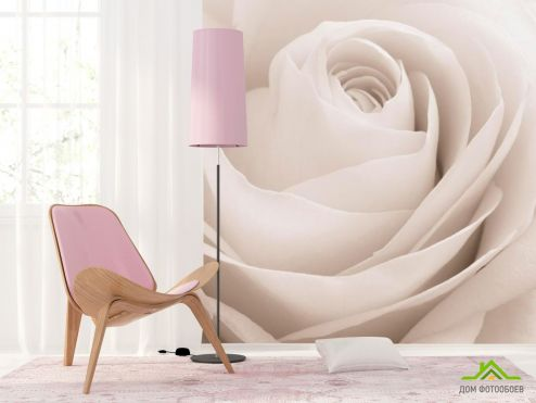 обои Цветы Фотообои Роза белоснежная