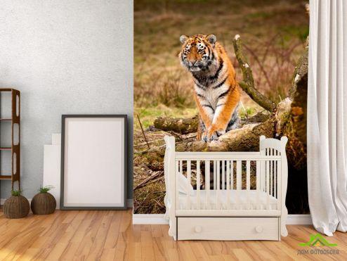 обои Тигры Фотообои Удивленный тигр
