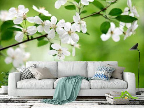 обои Абрикос Фотообои Абрикосовые соцветия