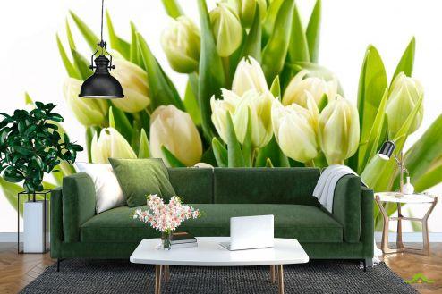 Зеленые  Фотообои Тюльпаны