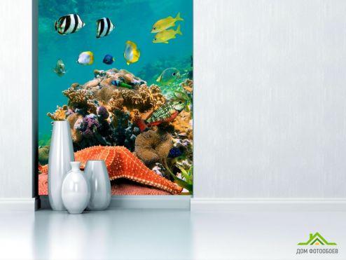 обои Рыбы и море Фотообои Морская звезда на рифе