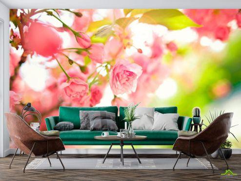 Розовые  Фотообои Цветущее дерево