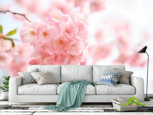 Вишня Фотообои Вишня цветет