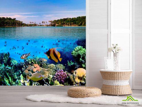 обои Рыбы и море Фотообои Морские рыбки