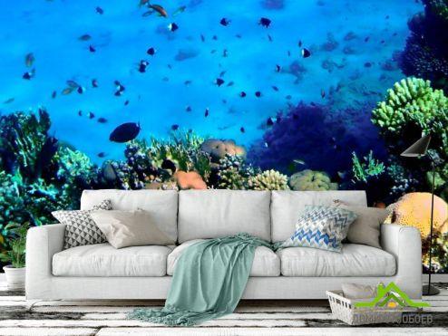 Рыбы и море Фотообои Красота подводного мира