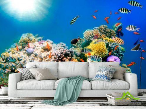 обои Рыбы и море Фотообои Рыби в море