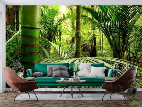Природа Фотообои Бамбук, листья