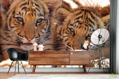 Тигры Фотообои Тигрята