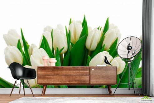 Тюльпаны Фотообои Белые тюльпаны купить