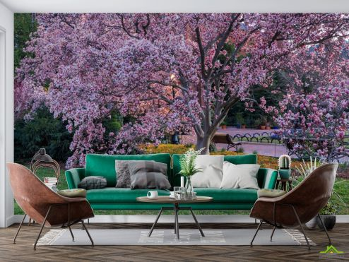 Природа Фотообои пушистое розовое дерево