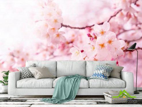 обои Цветы Фотообои Весной цветущая вишня