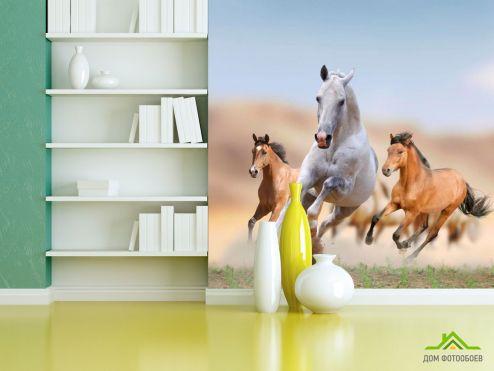 обои Лошади Фотообои Игры лошадей
