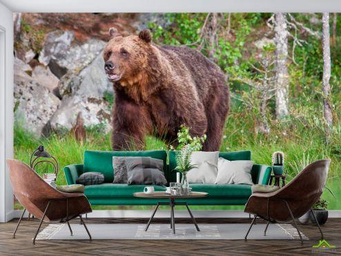 Животные Фотообои Медведь в лесу