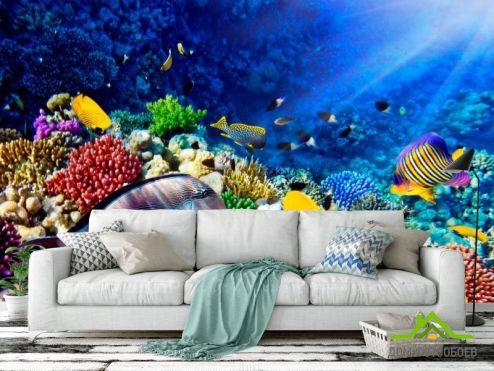 обои Рыбы и море Фотообои Рыбы в глубине