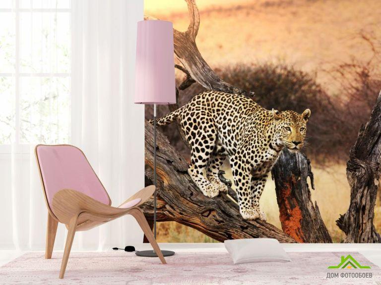 Фотообои леопард на ветке