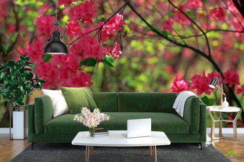 Фотообои Кипарис по выгодной цене Фотообои Цветущий кипарис