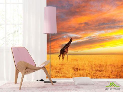 обои Жирафы Фотообои Жираф в поле