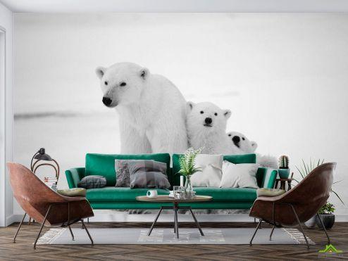 Медведи Фотообои Медведи полярные