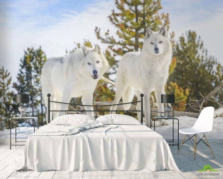 Фотообои два белых волка на снегу