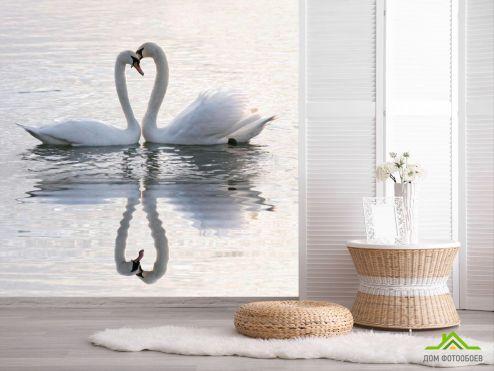 обои Животные Фотообои Два лебедя
