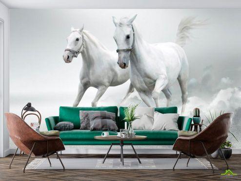 Животные Фотообои Две белых лошади