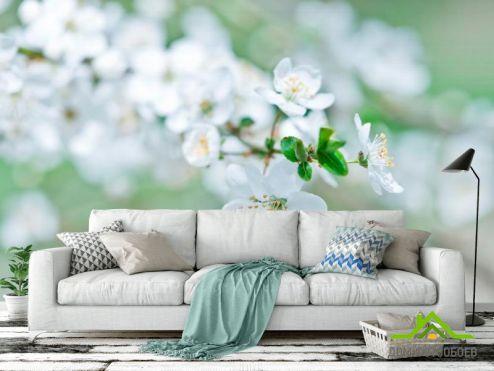 обои Абрикос Фотообои Весной цветущий абрикос