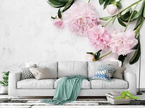 Фотообои Цветы по выгодной цене Фотообои Нежные пионы