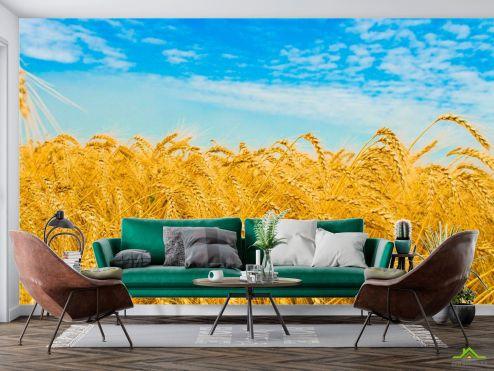 Природа Фотообои Пшеница