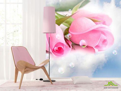 обои Розы Фотообои Бледно-розовые розы