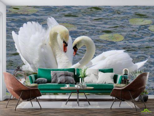 Птицы  Фотообои два лебедя