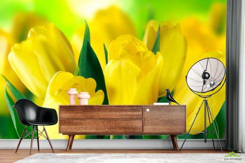 Тюльпаны Фотообои Ярко-желтые тюльпаны купить