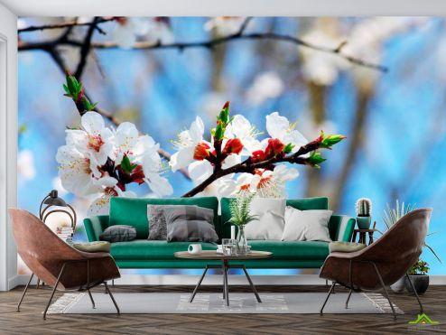 Вишня Фотообои Маленькие вишневые цветочки