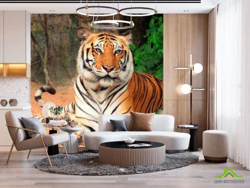 Оранжевые  Фотообои Тигр на отдыхе