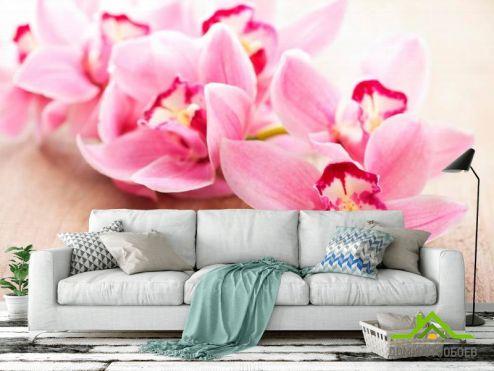 обои Цветы Фотообои Орхидея