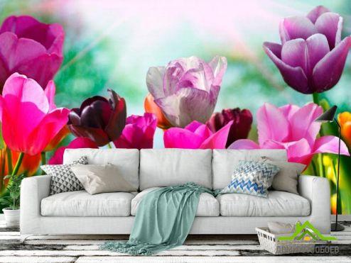 Тюльпаны Фотообои Тюльпаны редких цветов