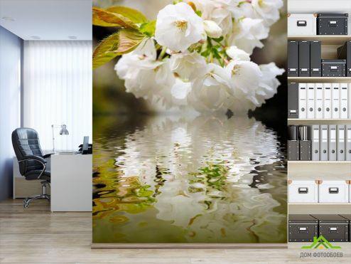 обои Цветы Фотообои Цветы абрикоса над речкой
