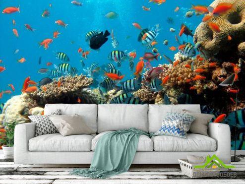 обои Рыбы и море Фотообои Рыбки в коралловых рифах