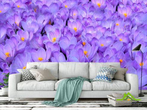 Фиолетовые обои Фотообои Нежно-сиреневые подснежники