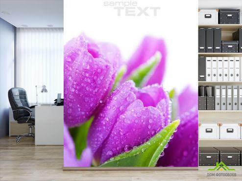 Фиолетовые обои Фотообои Тюльпаны сиреневых тонов