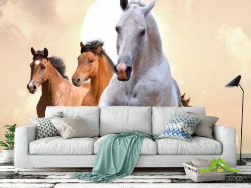 Лошади Фотообои Скачки лошадей