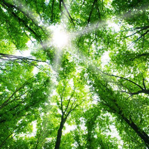 обои на потолок Фотообои свет свозь кроны деревьев