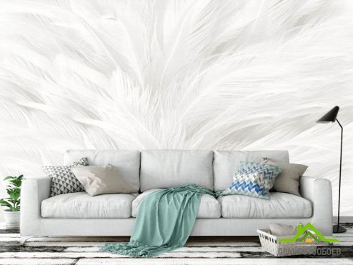 обои перья Фотообои Белые перья
