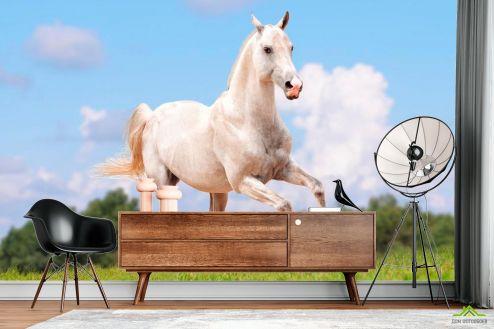Лошади Фотообои Бегущий конь