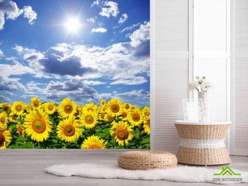 обои Подсолнухи Фотообои подсолнухи, небо и солнце