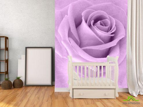 обои Розы Фотообои сиреневая роза