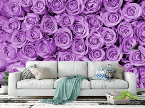 Фиолетовые обои Фотообои Розы