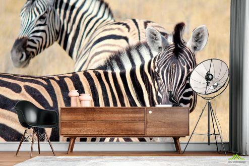 Зебры Фотообои Настороженные зебры