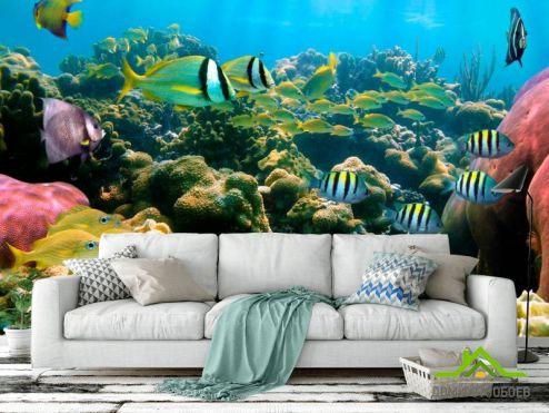 обои Море Фотообои Косяк рыбок