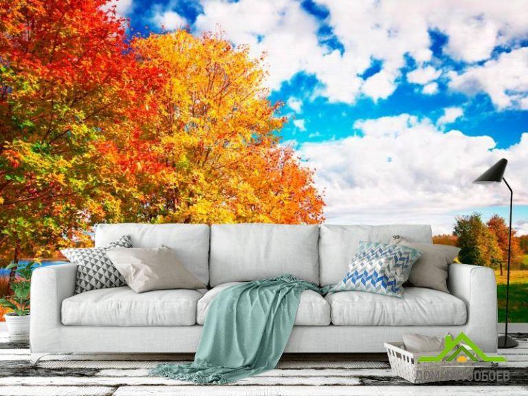 Фотообои Осень, деревья
