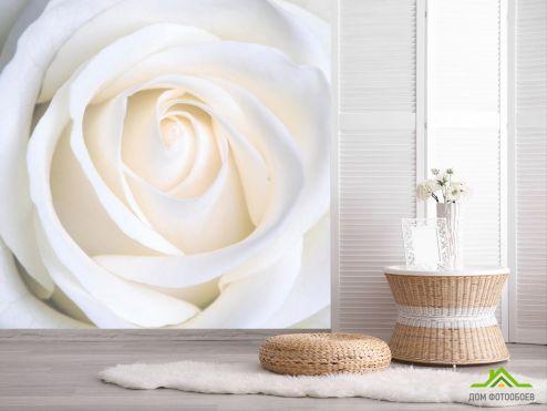 обои Розы Фотообои Бутон белоснежный
